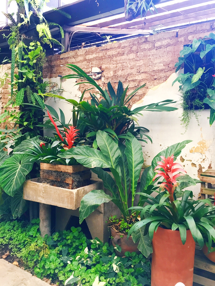Forest bathing in the city is possible. At least in Guatemala City. Find out more about THE PLACE to leave stress behind and dwell in an orchid sanctuary. Seizing the staycation with my JORD like a boss.