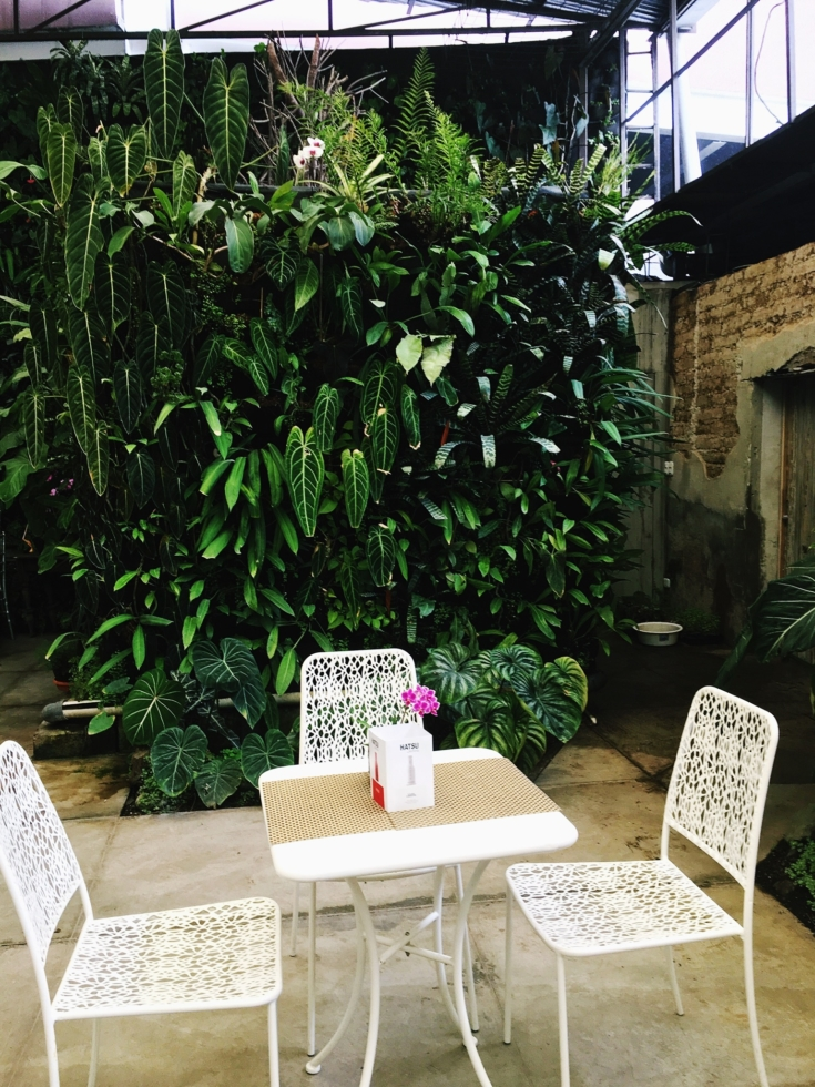 Forest bathing in the city is possible. At least in Guatemala City. Find out more about THE PLACE to leave stress behind and dwell in an orchid sanctuary.